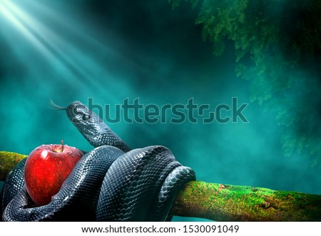 Black snake with an apple fruit in a branch of a tree. Forbidden fruit concept. Stok fotoğraf ©
