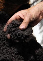 black soil in hand