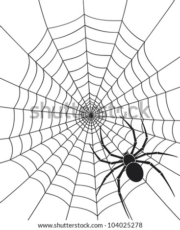 black spider and web