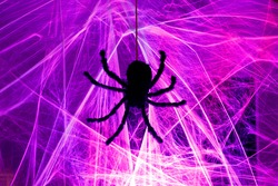 Black Spider Crawling on Cob Web for Halloween Light Up Night Decoration