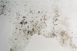 Black spots of toxic mold and fungus bacteria on a white wall. Concept of condensation, damp, water infiltration, high humidity and respiratory problems.