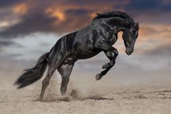 Black stallion run in desert against dramatic sky