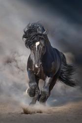 Black stallion run on desert dust against dramatic background