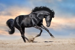 Black stallion with long mane run gallop in sand