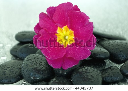 Black stones and flower with some water drops - stock photo