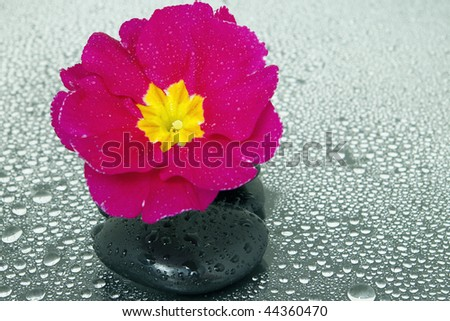 Black stones and flower with some water drops