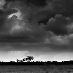 Black stormy clouds creating a foreboding sky above a cowering tree