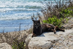 Black stray cat lies on coastal rocks on background of sea waves, and basking in the sun. Seaside resort concept, homeless animals, environment