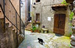 Black stray cat walking on courtyard street. Cortyard stray cat. Stray cat courtyard