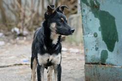 black stray dog. funny, little dog. black dog on the street. hungry animal close-up. animal shelter concept, veterinary medicine, problem of stray dogs