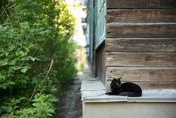 black street cat lies near the old house