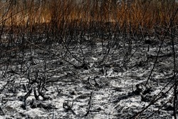 Black surface of the rural field with a burned grass. Effects of grass fire on soils. Charred grass after a spring fire. Consequences of arson and stubble burning. Aftermath of Natural Disasters.