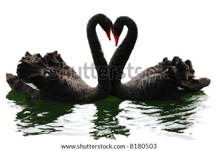 Black swans heart. Isolated over white. Valentine series.
