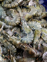 Black tiger shrimp/fresh prawn  is on sale in the market.