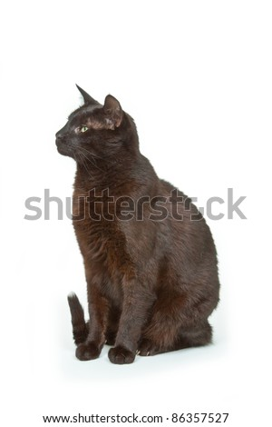 Black Tomcat on bright background. Shot in studio. - stock photo