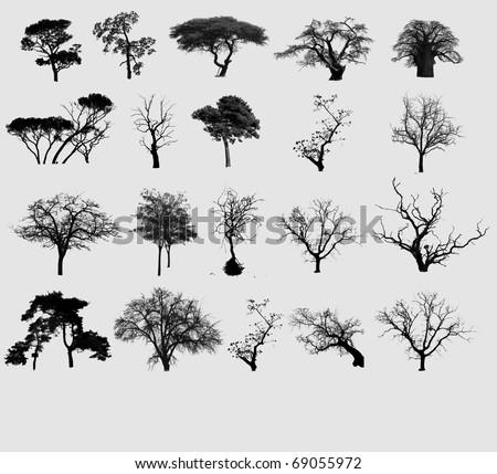 Black tree selection