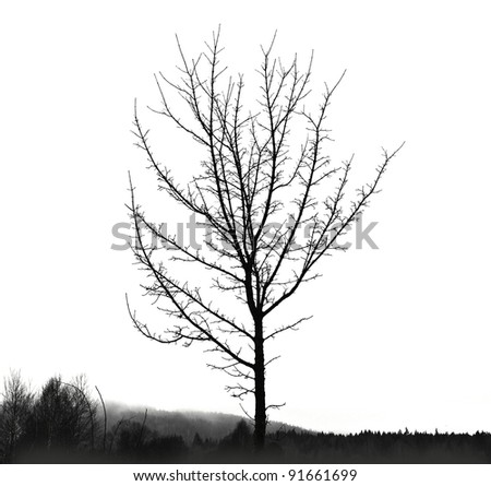 black tree silhouette and ground  isolated on white