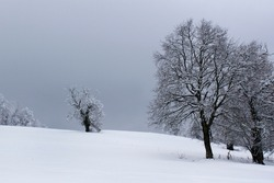 Black tree silhouette on wintery white snow rural landscape