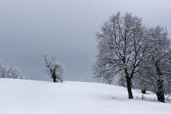 Black tree silhouette on wintery white snow rural landscape