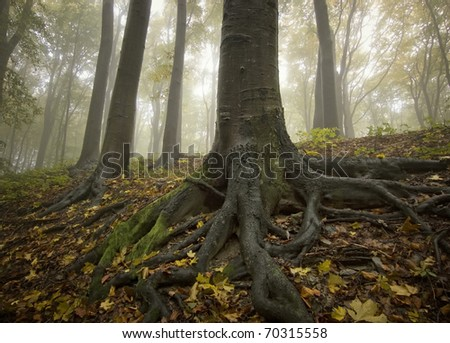 black tree with big roots in a golden forest in autumn
