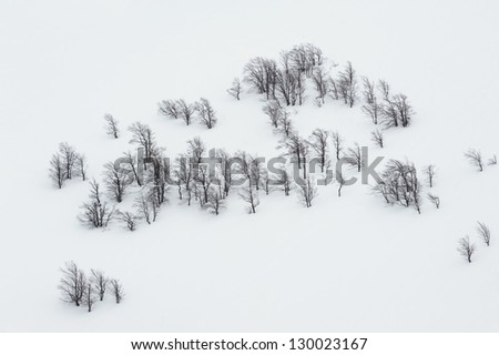 black trunks of beech trees on the white untouched snow