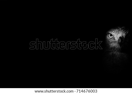 Black white bird photo. Dark background. Art in nature.