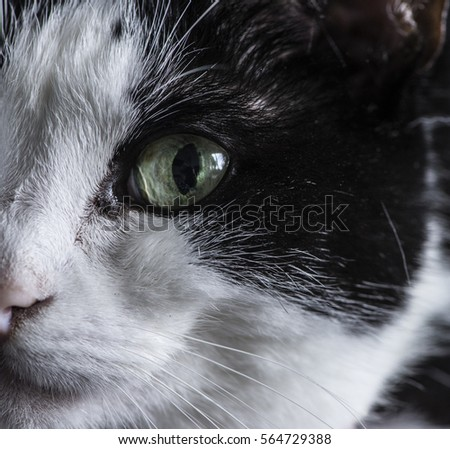 Black & white cat [Felix-cat] #564729388