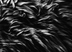 Black white wool texture background, cotton wool, grey  fleece, gray natural sheep wool, texture of dark fluffy fur, black  white nappy long wool coat, dark carpet, close-up macro, abstract, skin,