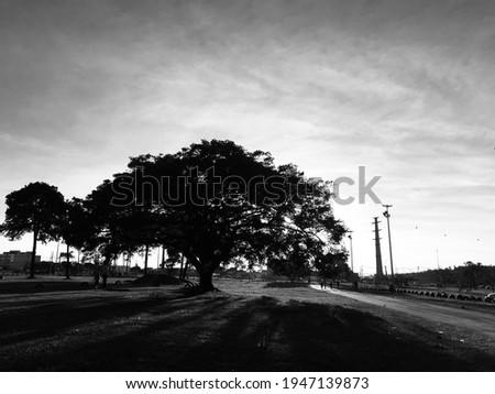 Black whithe, art, nature, view, atr's  Foto stock ©