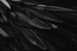Black wing feathers detail, abstract dark background