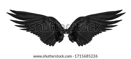 Photo of  black wing isolated on white background.