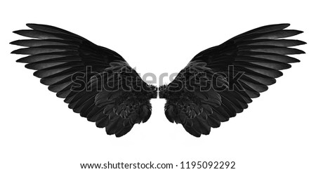 black wings isolated on a white background #1195092292