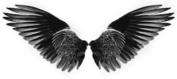 black wings isolated on white