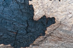 Black wood texture of burnt tree after fire