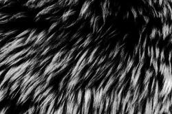 Black wool texture background, dark natural sheep wool, texture of gray fluffy fur, close-up of a long  grey wool carpet