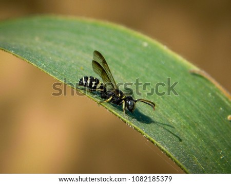 Yellow bug Images and Stock Photos - Page: 9 - Avopix com