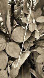 blackandwhite b&w blackwhite flower blooming leafs leaf nature environment