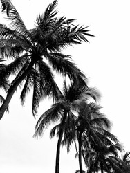 Blackandwhite beach Srilanka