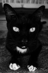 blackandwhite cat street