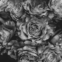 blackandwhite , roses , photography , iphone8plus , beauty