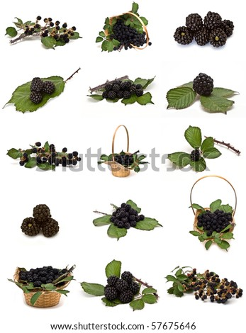 Blackberries collection isolated on a white background.