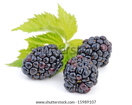 blackberries, object on a white background