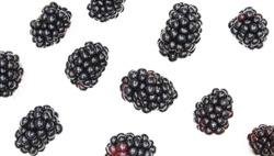 Blackberry backdrop. Multiple fruits isolated on white background