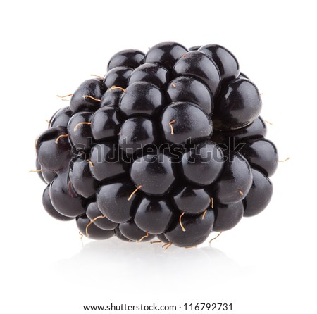 blackberry - fruit and food