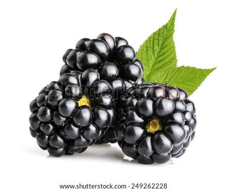 blackberry fruit isolated