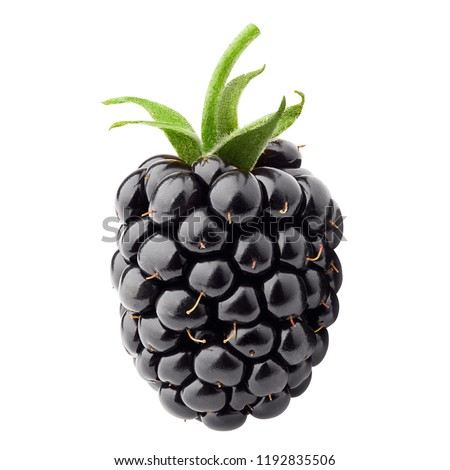 blackberry isolated on white background, clipping path, full depth of field