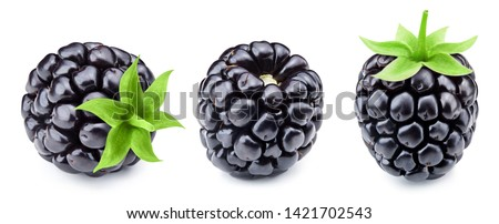 Blackberry isolated on white background close up. Blackberry collection Clipping Path. Professional studio macro shooting