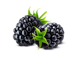 Blackberry isolated on white background with clipping path, closeup of two fresh blackberries