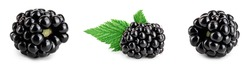 blackberry with leaf isolated on a white background closeup. Set or collection