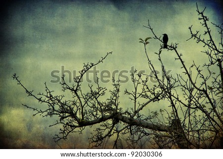 Blackbird on the branch mysterious atmosphere - stock photo